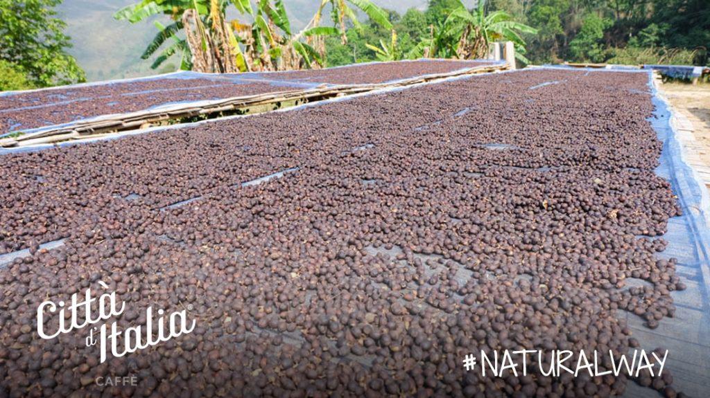 Lavorazione del caffè: metodo naturale